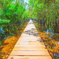 Wooden footpath over water