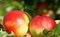 Rote Äpfel 2