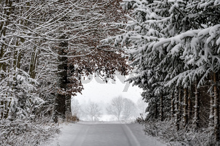 Road with trees and snow