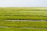 Küstenlandschaft mit Salzwiesen, Nationalpark Schleswig-Holsteinisches Wattenmeer, Deutschland