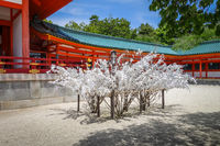Omikuji tree at Heian Jingu Shrine temple, Kyoto, Japan