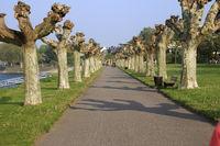 Allee aus Bäumen im Stadtpark von Andernach am Rhein