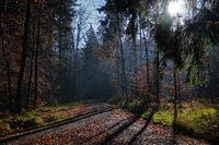 Waldstimmung mit Gegenlicht im Herbst