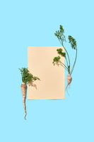 A piece of paper decorated with parsley roots with green leaves on a blue background with copy space. Creative postcard. Flat lay