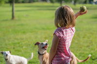 Girl throwing ball to the dogs