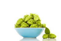 Green hops in in bowl isolated