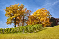 Farm house with vineyard in Erfurt city, Thuringia, Germany