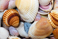 Variety of seashells at sunny summer day