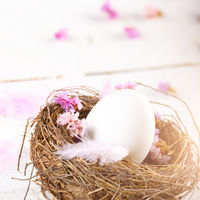 Egg in the nest with pink flowers and feather on white table