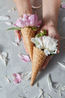 Creative post card of wafer cones with gentle peony flowers in a girls hands with petals on a gray concrete background.