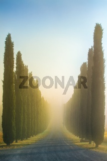 Idyllic Tuscan landscape with cypress alley at sunrise near Pienza