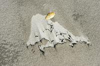 Von Wind und Gezeitenströmung geformte Sandoberfläche im Watt, Nordseeküste, Deutschland