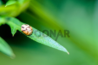 Close-up small insect sleeping on a green leaf
