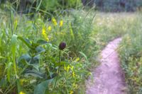Wild flower without petals beside a hiking trail