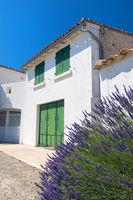 Ile de Ré Lavender and green blinds
