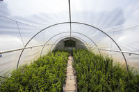 plants growing in greenhouse on a sunny day. Sustainable agriculture concept.