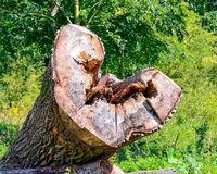 Ausgehöhlter Baumstamm