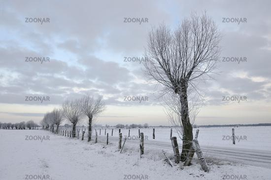 Wiesen und Weiden im Schnee... Bislicher Insel *Nordrhein-Westfalen*, Winterstimmung