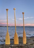canoe paddles on lake shore