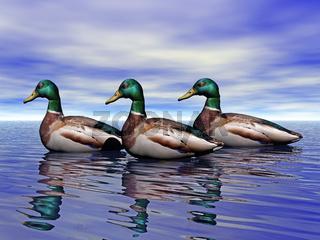 Enten auf dem Wasser