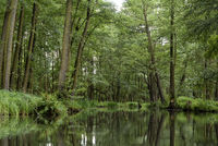 landscape in the Spreewald in Brandenburg in Germany