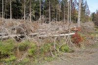 Windbruch, Sturmschaden, Harz, Deutschland