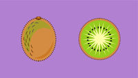 Kiwi Fruit Banner Vector