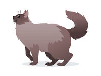 Long-haired cat with long fluffy tail icon, pet isolated on white background, domestic animal, vector illustration in flat style.