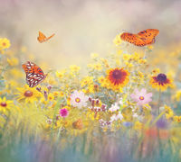 Butterflies in a meadow