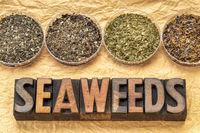 seaweeds - diet supplements concept