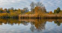 Herbstliches Schilf am Ufer