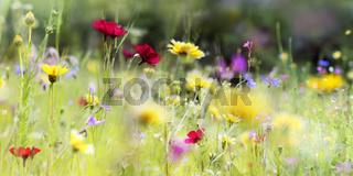 wildblumenwiese natur banner