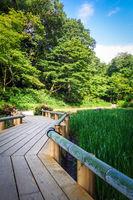 Meiji jingu inner garden, yoyogi park, Tokyo, Japan