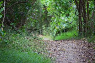 Walking Track Through Bushland