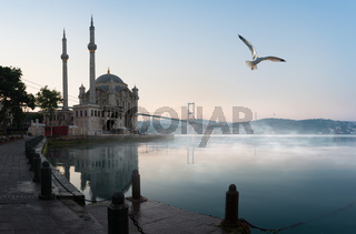 Seagull over Ortakoy Mosque
