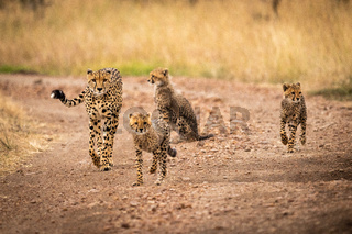 Cheetah and three cubs walking down track