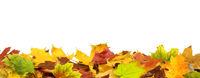 Herbst 71