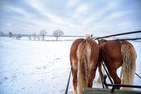 sleigh ride in Masuria