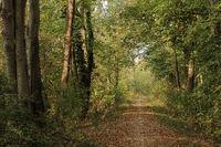 Weg durch das Naturschutzgebiet