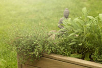 Gartenkräuter mit Buddha-Figur