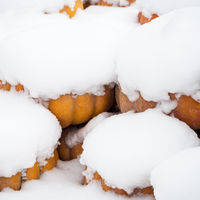 Pumpkin covered with snow in winter
