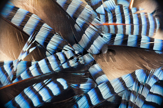 Spotted contrast feathers as basis of natural design