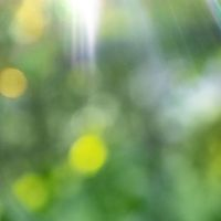 Green blurred foliage with bright sun rays. Natural bokeh background