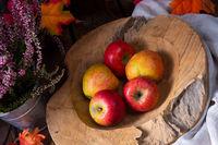 Malus sylvestris, the tasty European crab apple,