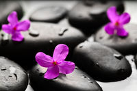 Grey wet pebbles with flowers background wallpaper