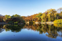 reflections in changgyeong palace