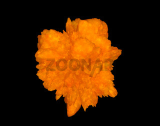 Cancer Cell isolated on black