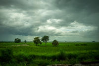 Field in the storm, Chiang Mai, Thailand