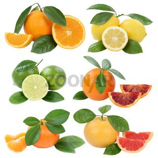 Collage Orangen Zitrone Mandarine Grapefruit Früchte Freisteller freigestellt isoliert