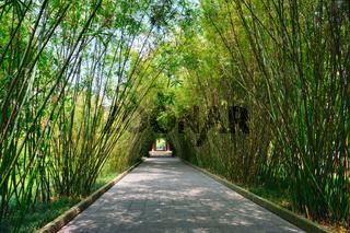 Wangjianglou park. Chengdu, Sichuan, China